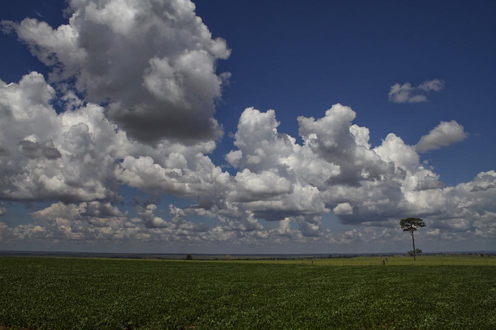 Grandes plantaciones de soja y otros granos hacen honor al nombre de esta Colonia Menonita. (Rio Verde, San Pedro, Paraguay - Tetsu Espósito)