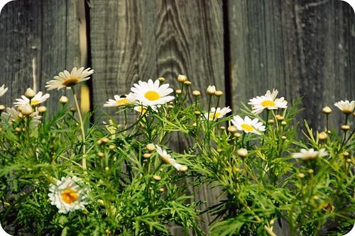 (unofficial) flower week