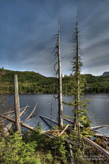 Along logging roads of Graham Island - Haida Gwaii (janusz l) Tags: trees lake geotagged island islands logs logging hills hdr grahamisland queencharlotte haidagwaii janusz leszczynski mywinners geo:lat=53600451 geo:lon=132444005 alongloggingroads 003424