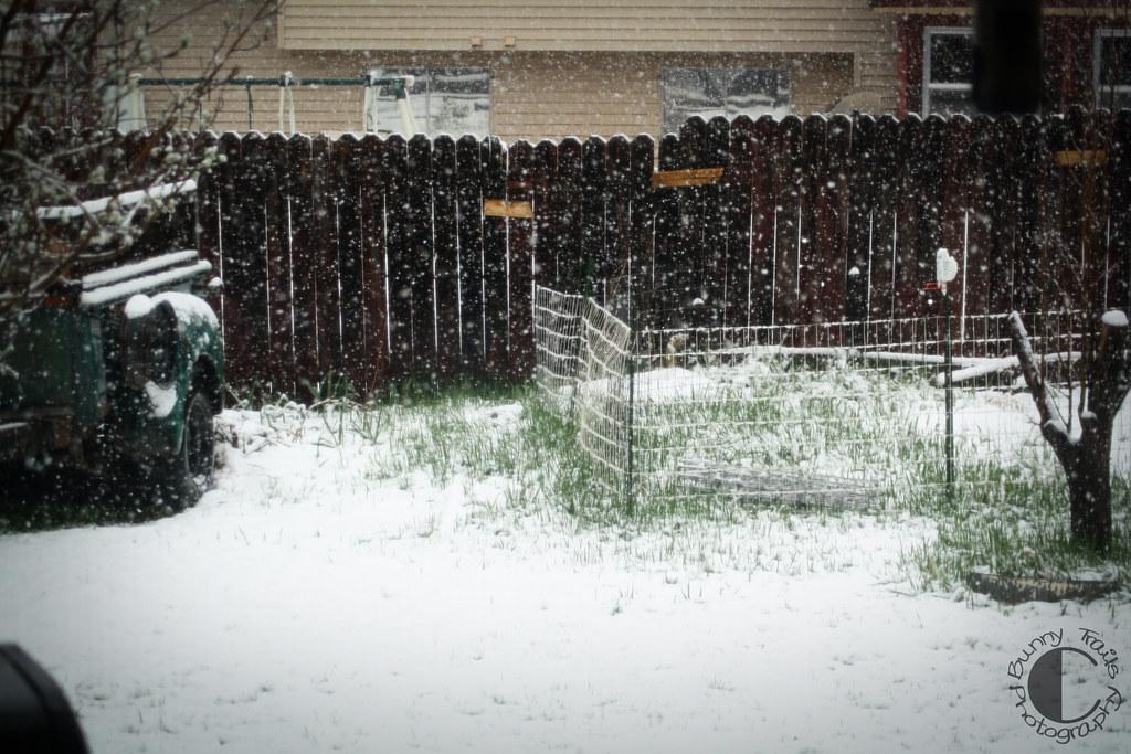 113-blizzard1