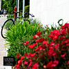 parked among flowers (simis) Tags: red man black brick green bicycle metal wall walking square purple bokeh scene sidewalk fromarchives rosyshot