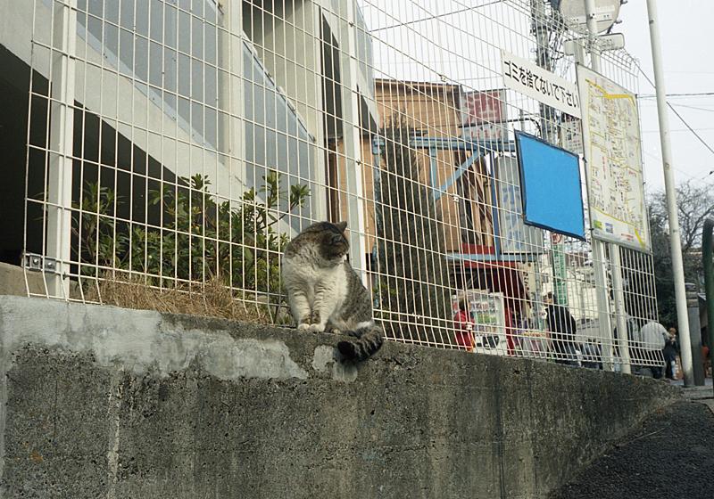 ふてぶてしい猫