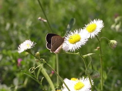 RIMG1347 昆虫