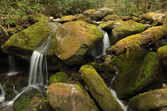 IMG_5759 (Brandon Feagan) Tags: creek waterfall spring stream tn tennessee hike smokies greatsmokymountainsnationalpark gabesmountaintrail sugarcove campsite34