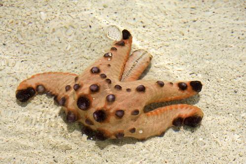 Starfish Show 2