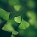 lot´s of leafs von dasheinzelmaennchen