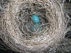 Nest_2eggs_42910