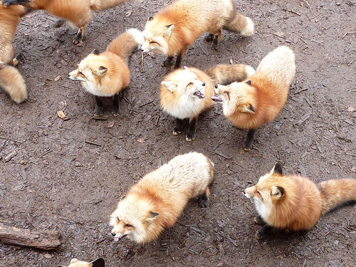 fox12