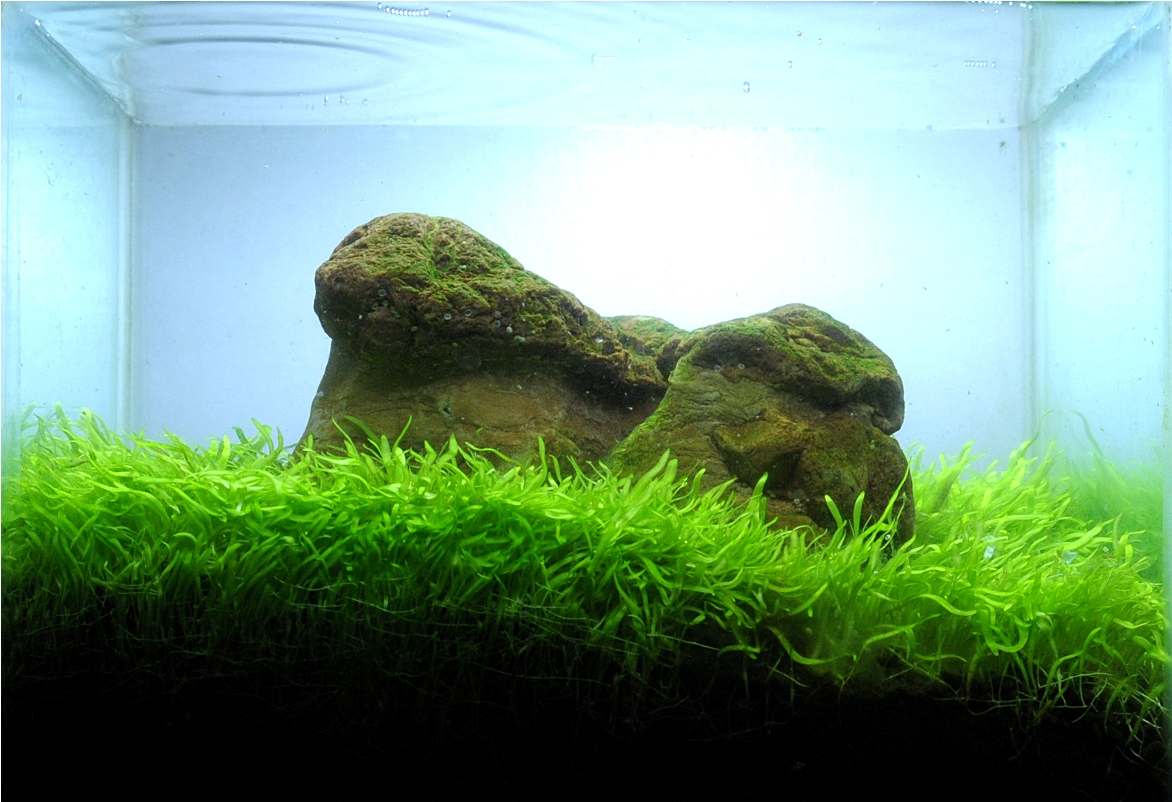 Forum Aquascaping : hamza Aspiring Aquascaper