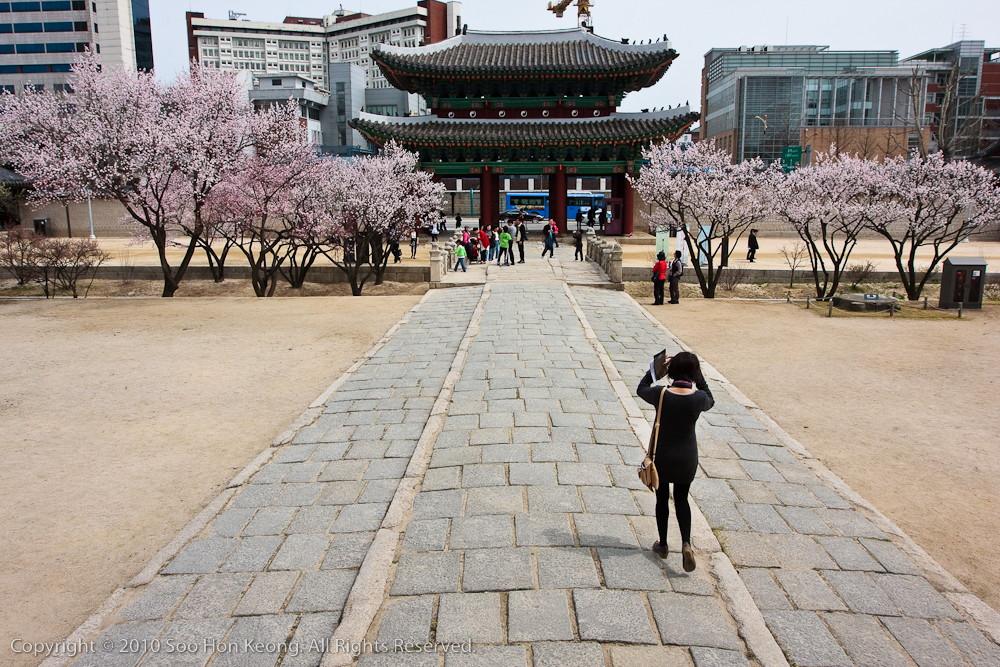 Changgyeonggung Palace @ Seoul, Korea