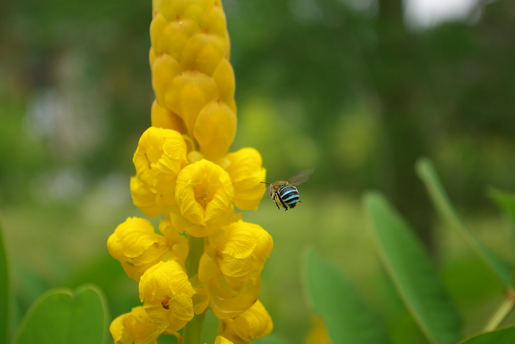 [分享]新手試拍-小蜜蜂