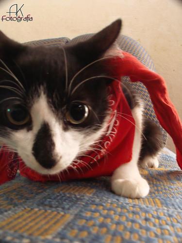 gato twitter