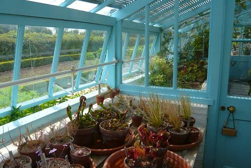 Charles Darwin's greenhouse