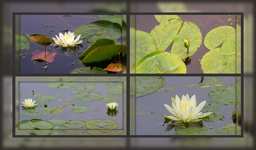 Lotus Collage
