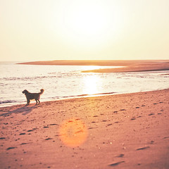 Forever <3 (A. Spence) Tags: ocean sunset sky dog pet sun love beach water canon happy golden bay sand provincetown capecod massachusetts retriever atlantic flare 5d atlanticocean herringcove furryonews