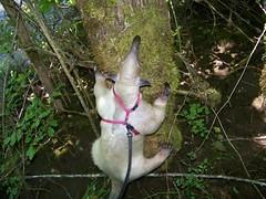 I will climb it