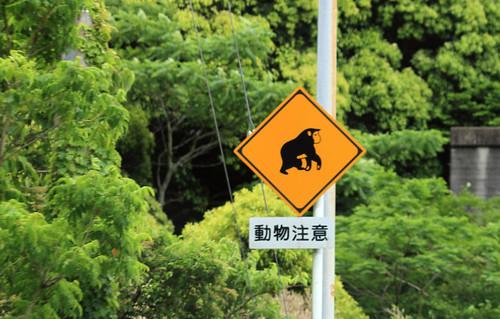 cuidado monos