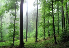 GreenVaporescentDream (BphotoR) Tags: light mist green leaves fog forest canon germany nebel hessen powershot trunks wald dunst odenwald naturesfinest supershot g10 juhhe ultimateshot flickrdiamond theunforgettablepictures updatecollection bphotor
