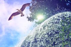 Fly me to the sun :) ( Melancoly) Tags: trees sky sun bird soleil fly waterfall ciel cascade goeland flymetothesun
