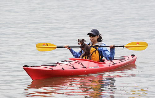 Kayak dog