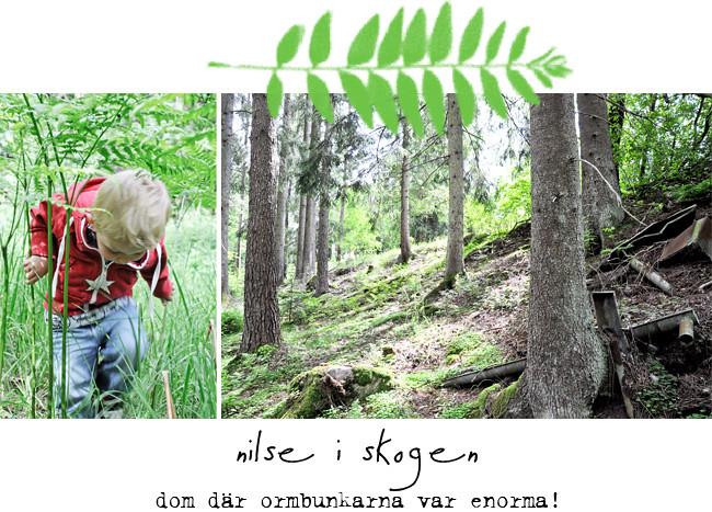 nilse i skogen