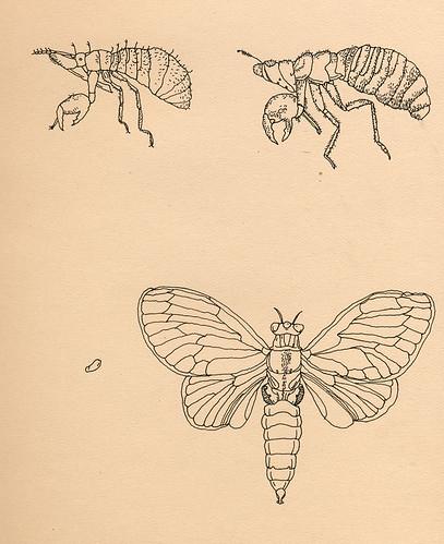bugs01