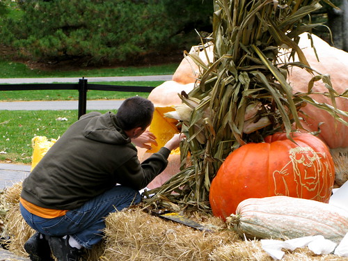 Giant pumpkin carver Scott Cully sets to work on the 1810.5 lb World Record