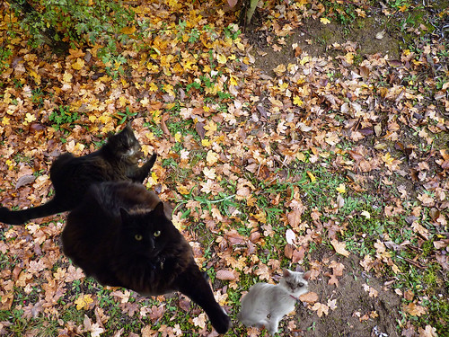 Cats in the Leaves
