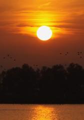 Sunset in Hoechst / Sonnenuntergang in Hoechst (Baubo Bittern) Tags: sunset austria sonnenuntergang hoechst vorarlberg rheindelta