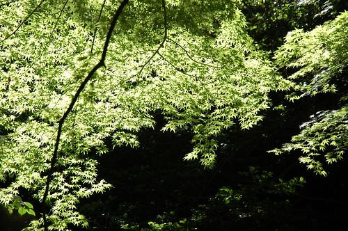 Kyoto 京都 - Ohara 大原