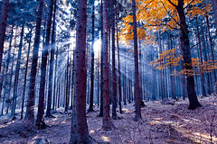 autumn forest (kubais) Tags: autumn fall forest highlands czech javorice treeguprautumnczechfallforesthighlandsjavoricetree