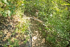 IMG_1309 (steveaylor) Tags: branson missouri flowers trail forest stone steps