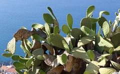 Rocca di Cefalù (raffaele pagani) Tags: cefalù sicily sicilia isola island italianisland martirreno tyrrheniansea iborghipiùbellid'italia themostbeautifulvillagesinitaly parcodellemadonie centrobalneare seasideresort italia italy canon