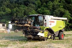 Claas Lexion 750 (Falippo) Tags: mietitrebbia combineharvester lexion claas claaslexion raccolta harvesting farming agriculture agricoltura