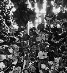 Limburg, Holland mining 1959 (Pitheadgear) Tags: limburg holland dutch netherlands coalmining mining coalfield coalindustry colliers collieries pits miner miners colliery pitmen industrialhistory history houiller bergmann minedecharbon houille puitsdecharbon kohlenpott steinkohlenzeche steinkohlenbergwerk steinkohlenbergbau minesdecharbon charbonnage schachtanlage bergwerk bergbau fördergerüst förderturm pütt pithead headframe headgear headstock mineheads chevalement fosse kopalnia mijn mina szyb dul schacht puitsdemines industry industrie industria