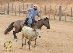 IMG_6128 (Edu Rickes) Tags: brazil horses brasil caballos cow cavalos rs riograndedosul sul tradicionalismo rodeio gaúchos beautifulshots piratini gineteada brazilianphotographers fotógrafosbrasileiros tirodelaço todososdireitosreservados fotógrafosgaúchos culturagaúcha edurickes belasimagens southofbrasil edurickesproduçõesfotográficas copyright©2010 fotografiaslegais