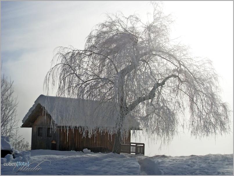 Fog, tree & house