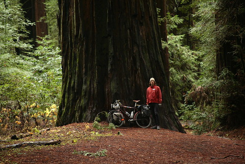 Me with giant redwood