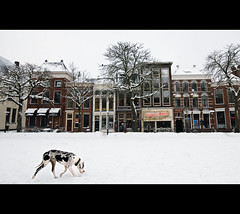 Snowdog patrol (Danil) Tags: christmas winter dog white snow holland netherlands sneeuw nederland groningen wintertime stad vismarkt d300 huizemaas snowdogpatrol