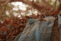 ياربي أبيها تصفالي (aljoharah algefary‎) Tags: blue trees leaf dry sail ورق شراع شجره ازرق جاف
