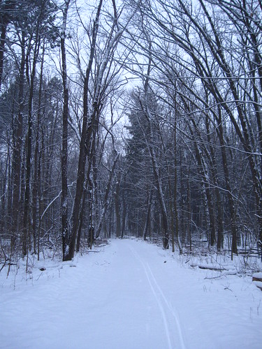 Snow-covered road into Saginaw Forest