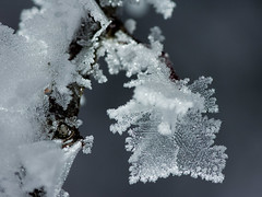Ice (iPhotograph) Tags: winter cold ice wow frost icecrystal d2hs tokinaatxpro28100makrod