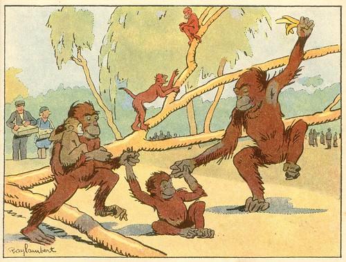 48 les singes