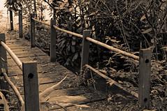 Old Bridge (Daniel Pascoal) Tags: sofranciscoxavier sfx danielpg