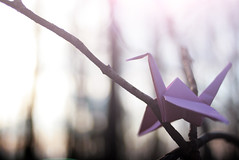 Your love will be safe with me. (Rebecca Tabor Armstrong) Tags: pink trees winter light sun bird lines forest evening wings woods focus origami dof bokeh branches papercrane shenandoahnationalpark 35mmf20