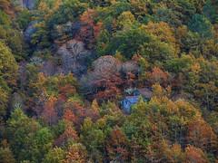 Invernía (Isidr☼ Cea) Tags: árboles colores bosque ourense ribeirasacra cristosende olympuse520