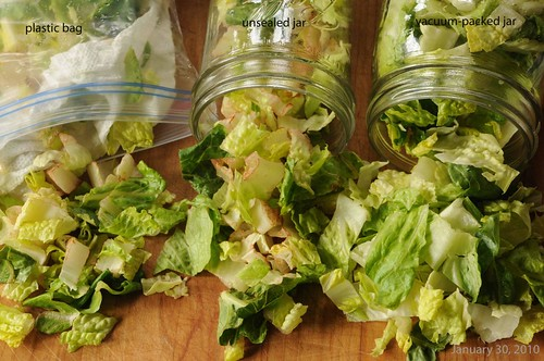 The Lettuce Experiment  --  1-30-10 lettuce jars