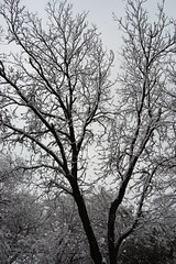 snowday.100211.13