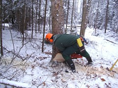 Timber Harvesting Fall 2009 (The Official Paul Smith's College Flickr) Tags: new york tree fall college beautiful truck paul major log education state forestry timber gis arts chainsaw adirondacks best class business colleges division biology 2009 firewood culinary hospitality smiths adirondack degree surveyor psc harvesting surveying skidder smitties