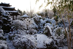 Sunrise in the middle garden after snow (Four Seasons Garden) Tags: charity uk winter england urban snow west english beautiful marie gardens garden four all open seasons picture tony national fourseasons scheme staffordshire newton walsall midlands ngs nationalgardenscheme